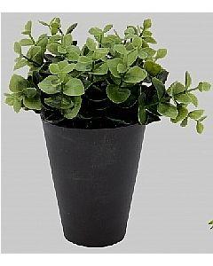 Grøn busk D