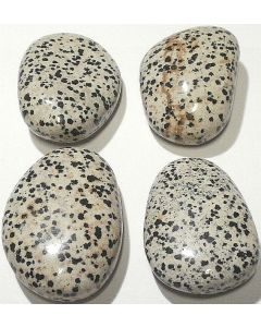 Dalmatiner stor 40-59 gr.